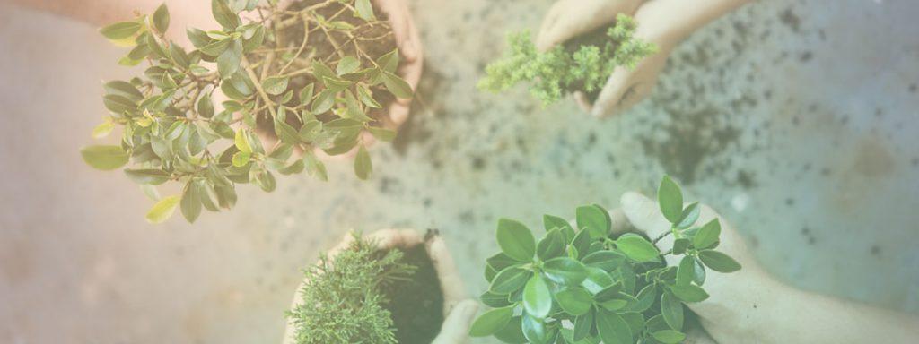 jardinagem e cuidados