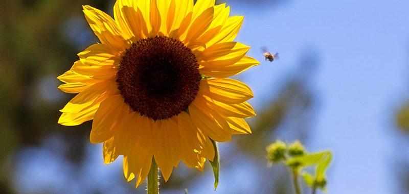 Cuidados com o Jardin no verão