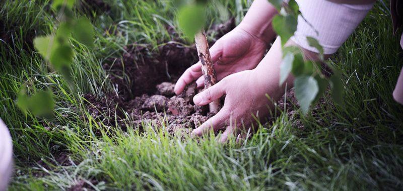 Terra e Crianças: Uma combinação perfeita