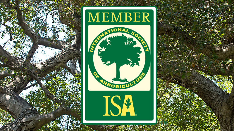ISA - Internacional Society of Arboriculture