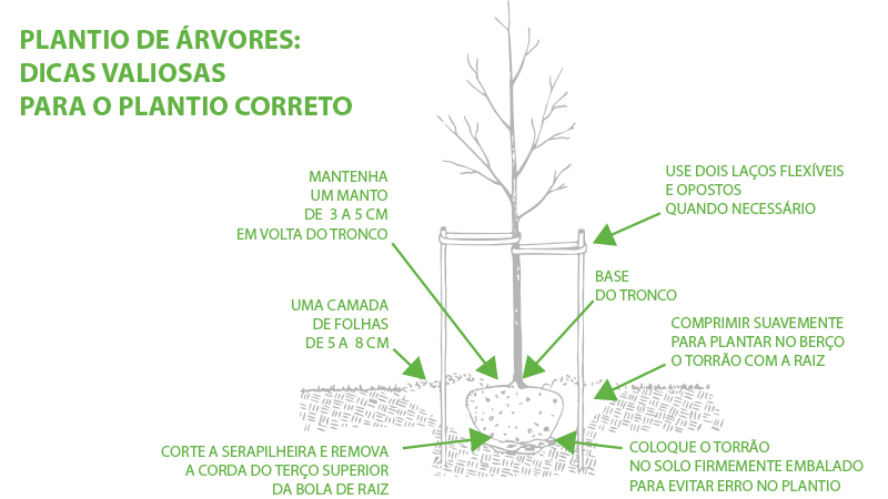 Plantio correto de árvores