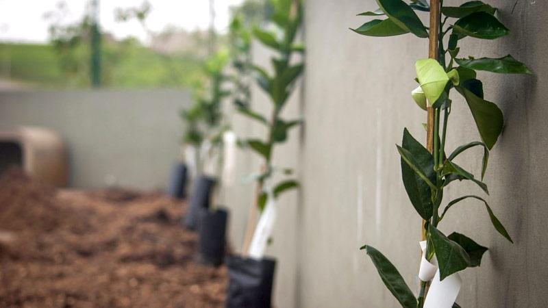 arborização urbana - projeto plantando futuro